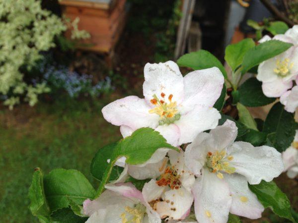 Bioland-Frühjahrsblütenhonig