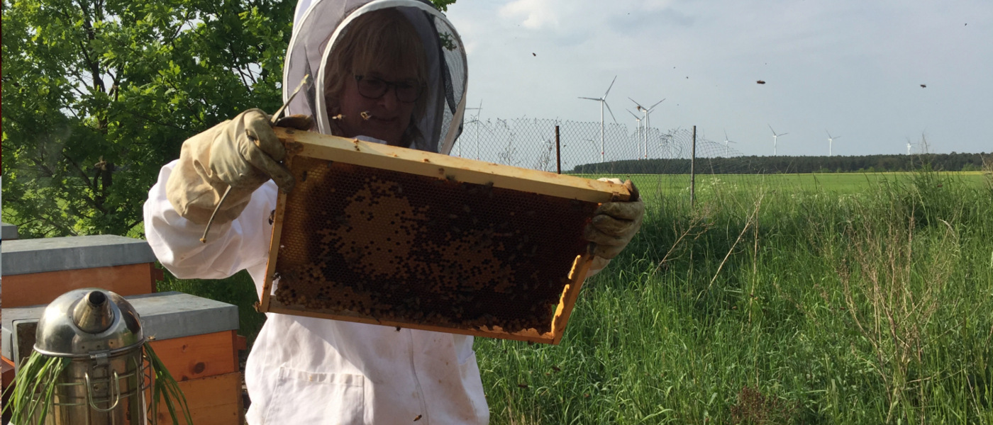 Imkerin inspiziert die Bienen