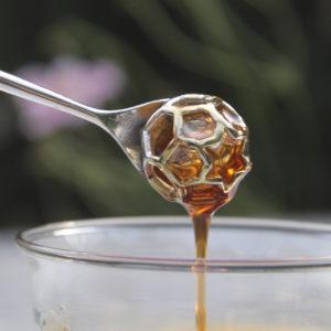 würzige Honige